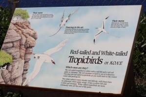 Tropicbird signage