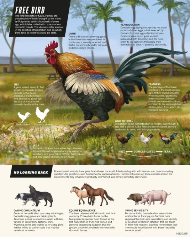 nature-freebird-graphic-21.01.16-v3
