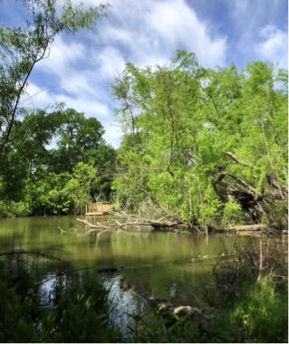 blairwoods2